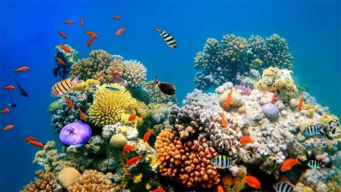 Rạn san hô